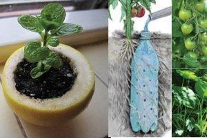 Os 10 Truques de jardinagem que te vão fazer um profissional da jardinagem